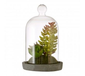 Fiori Small Succulent Dome with Cement Base