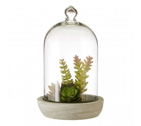 Fiori Large Succulent Dome Cement Base