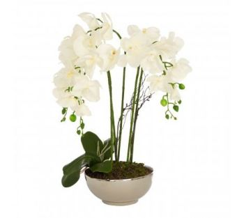 White Orchid Plant Natural Ceramic Pot