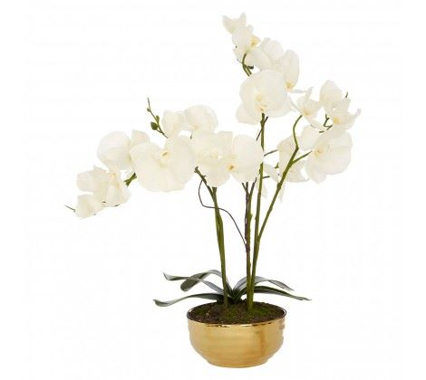 White Orchid Plant with Gold Ceramic Pot