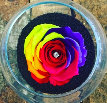 Single Frozen Rose - Rainbow