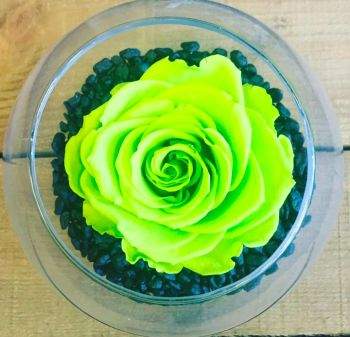 Single Frozen Rose - Green