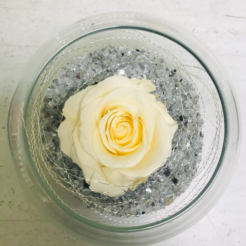 Single Frozen Rose - Cream