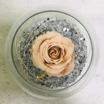 Single Frozen Rose - Peach