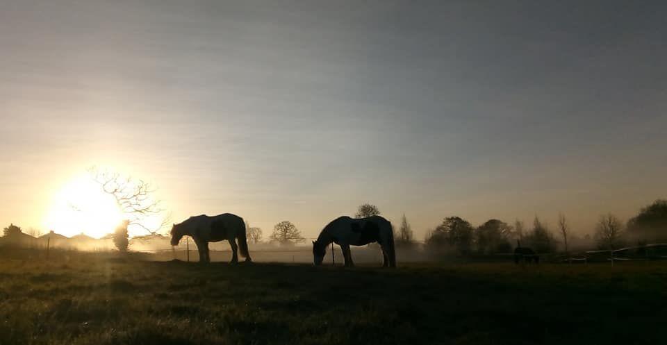 misty morning 11