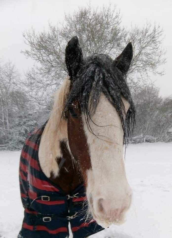 kez snowy day