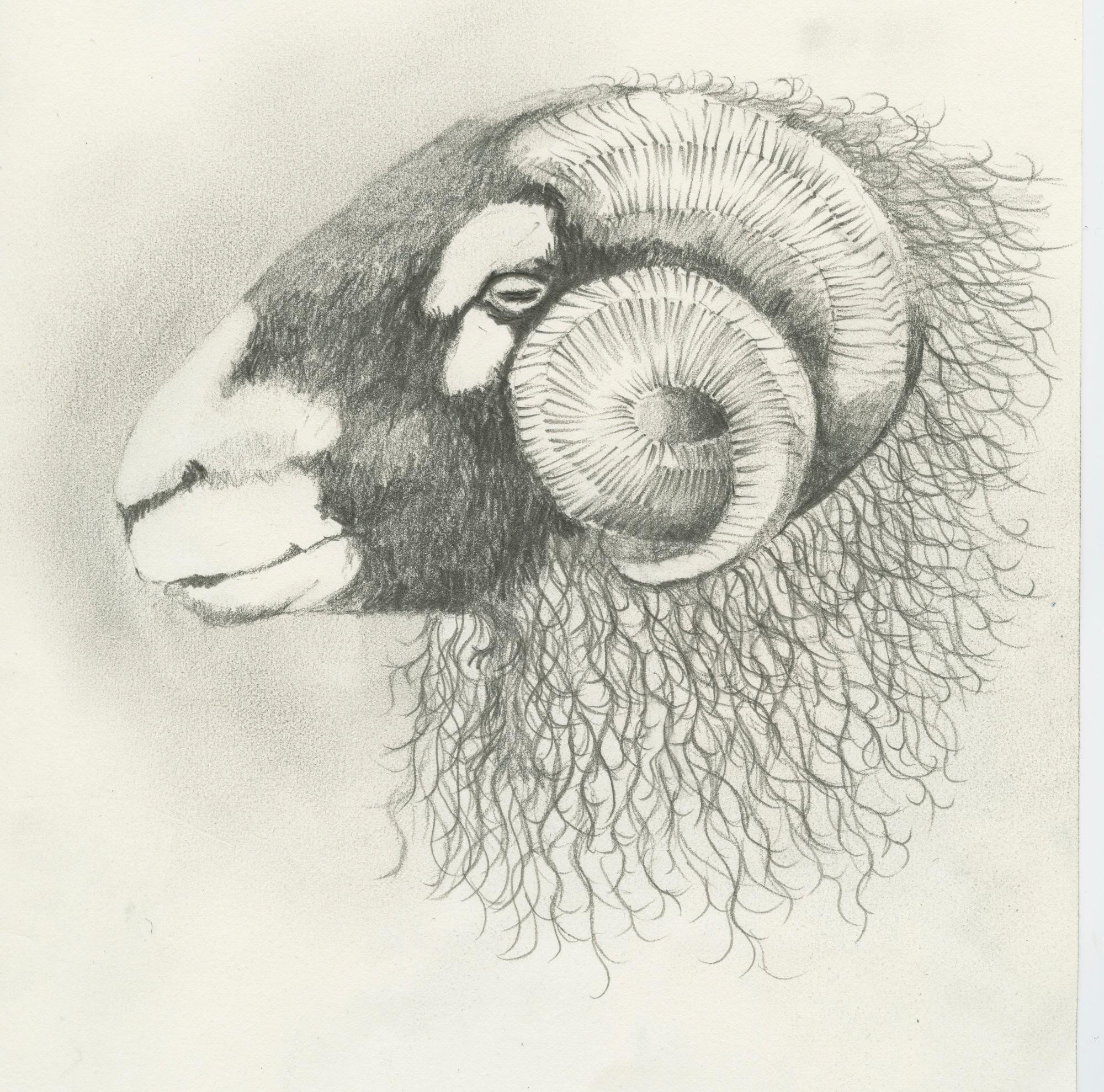 016 Swaledale Ram