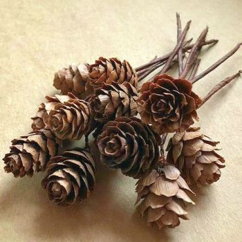 Natural Mini Pine Cone Picks