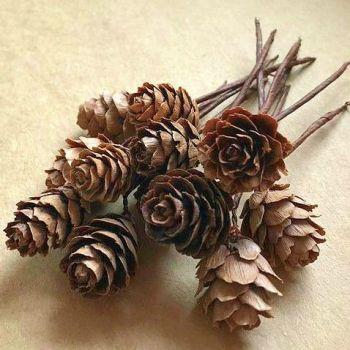 Natural Mini Pine Cone Picks