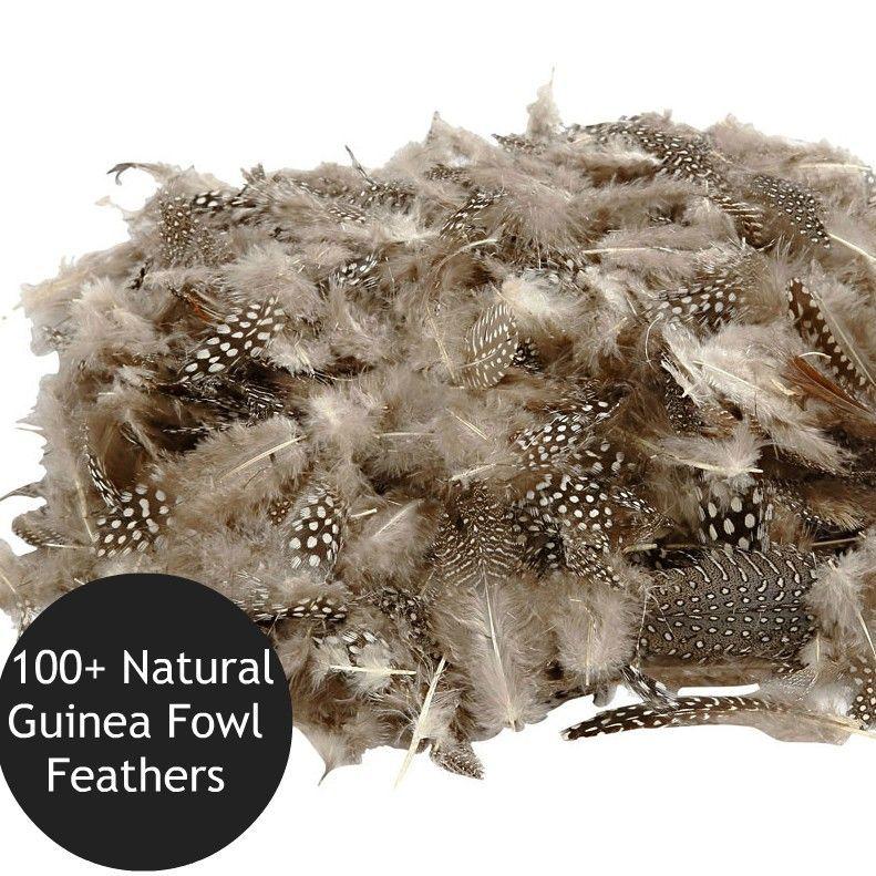 100+ Natural Guinea Fowl Feathers