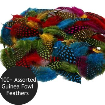 100+  Natural Guinea Fowl Feathers In Assorted Colours