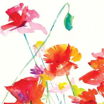 Wild  Poppies Greetings Card