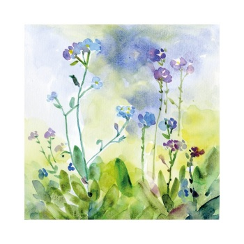 Forget-me-not Flowers signed Print