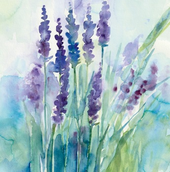 Lavender Field Greetings Card