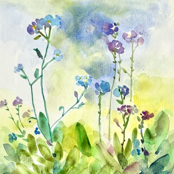 Woodland Forget-me-nots