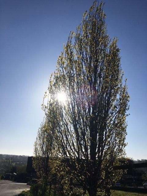 GOH Tree