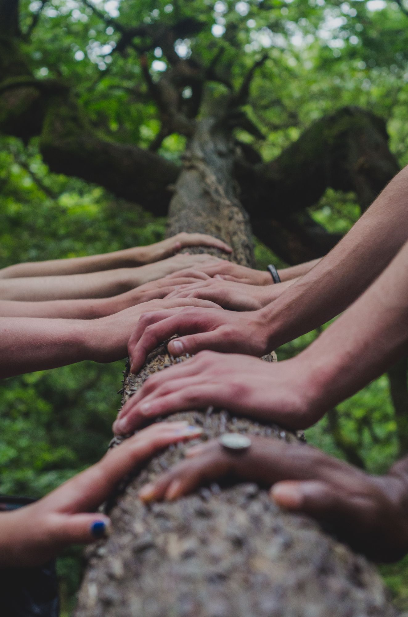 Close up of a tree branch with several people's hands on it