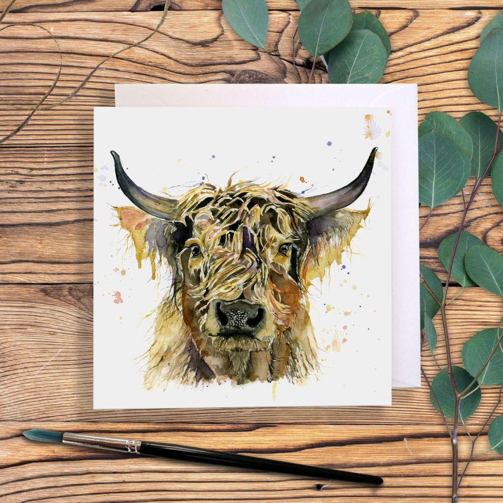 Highland cow 'Stan'