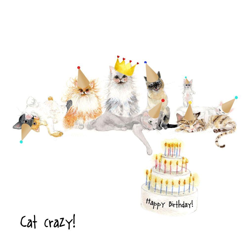 Cat crazy!