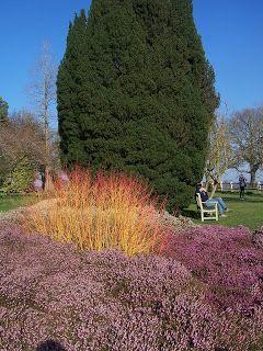 nyman gardens