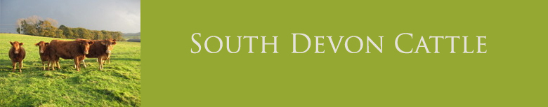 South Devon Cattle, site logo.