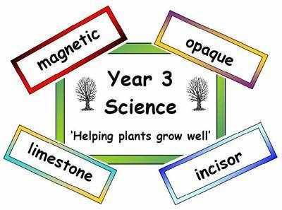 Year 3 Primary Science Vocabulary