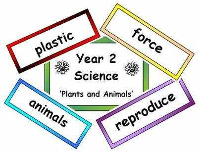 Year 2 Primary Science Vocabulary
