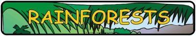 Rainforest Display Banner