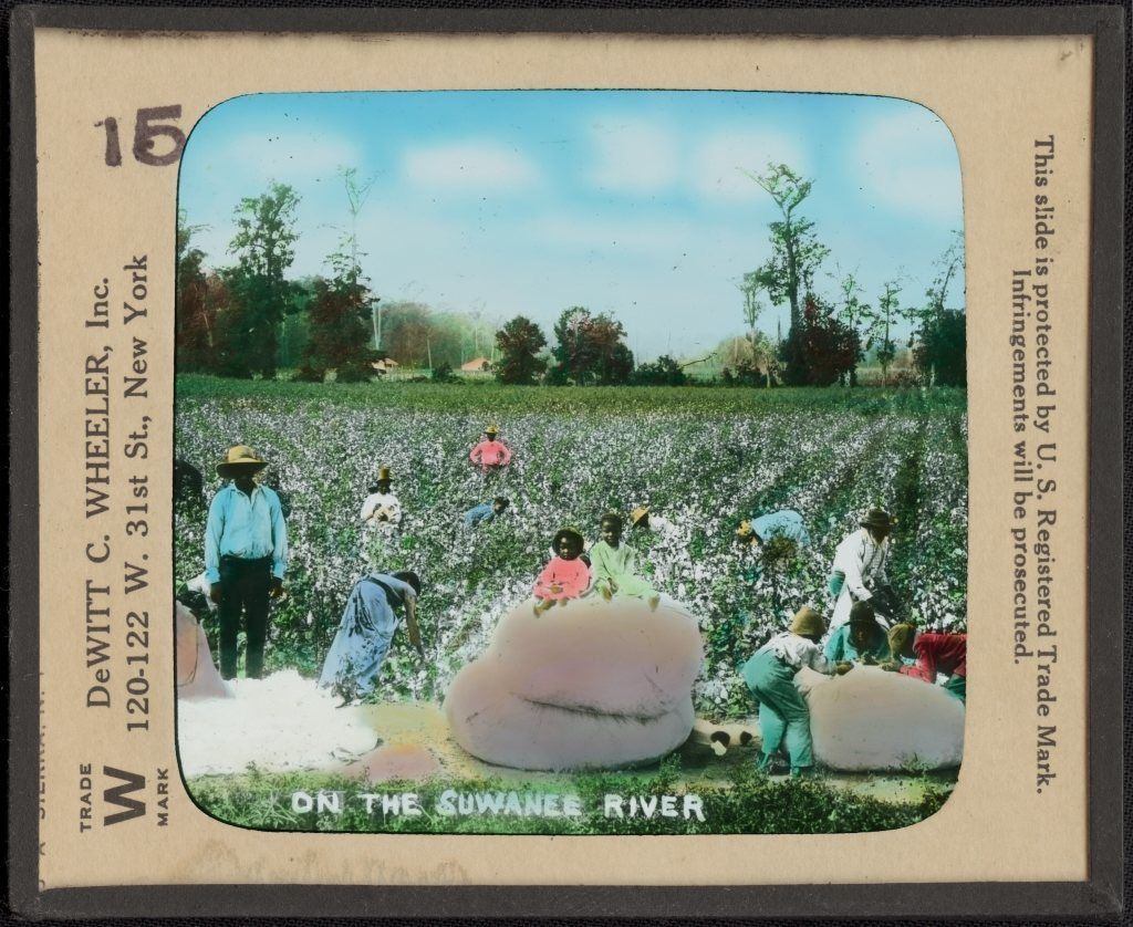 "This lantern slide image of African Americans picking cotton, titled ""On the Suwanee River,"" dates to the late-19th century. LOEWENTHEIL COLLECTION OF AFRICAN-AMERICAN PHOTOGRAPHS/PUBLIC DOMAIN"