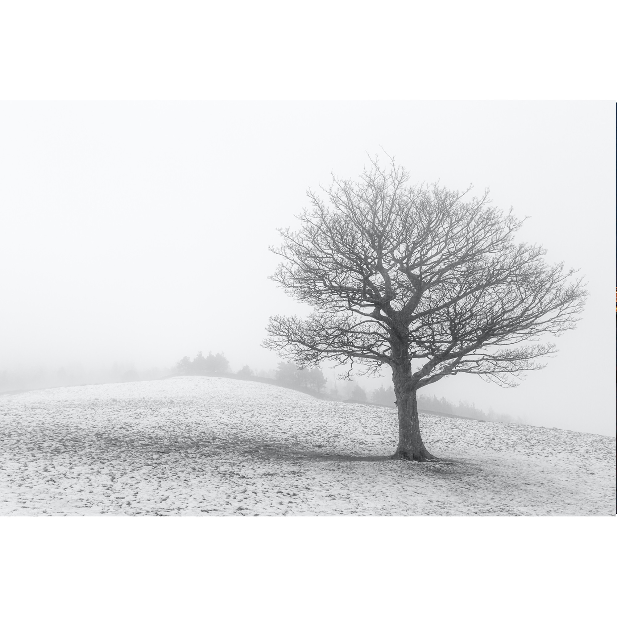 Lonely Tree Dovestones_WHITE.jpg