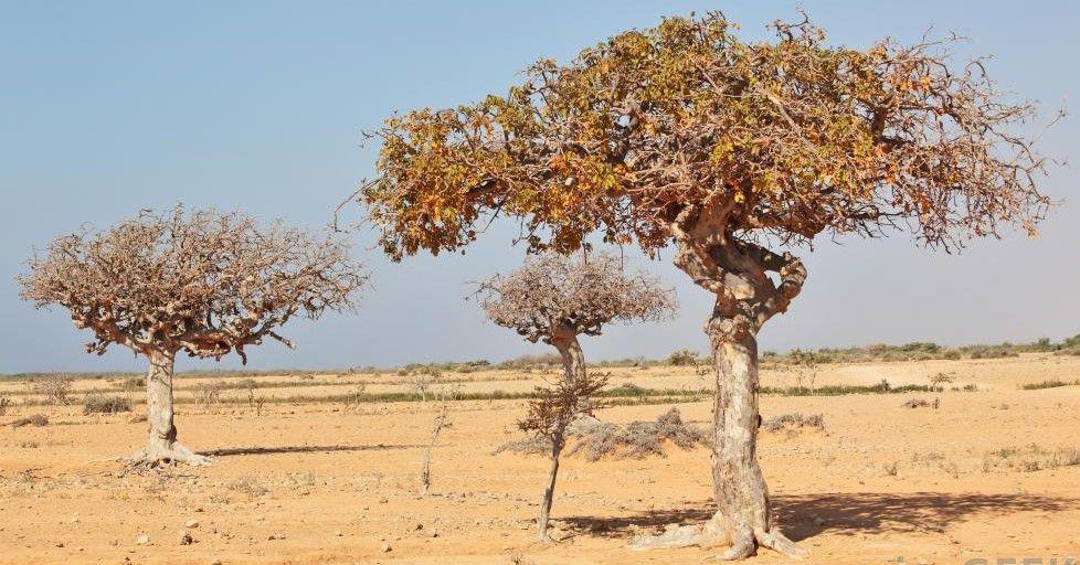A tree in a desert