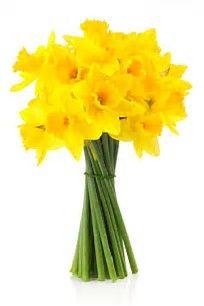 bunch of daffodil flowers.jpg