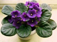 Unboxed Loose Incense Cones ~ Violet