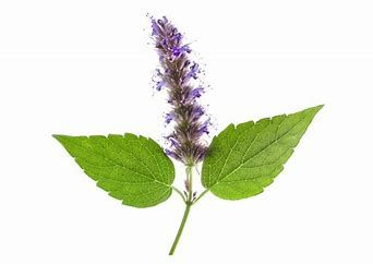 patchouli and flower