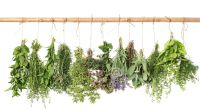 fresh-herbs-hanging-
