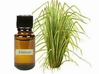 vetiver oil and plant