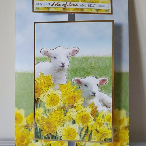 Large Lambs with Daffodils