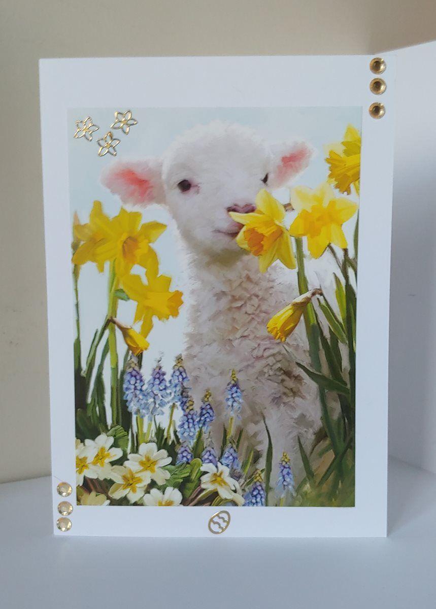 Lamb with Daffodils
