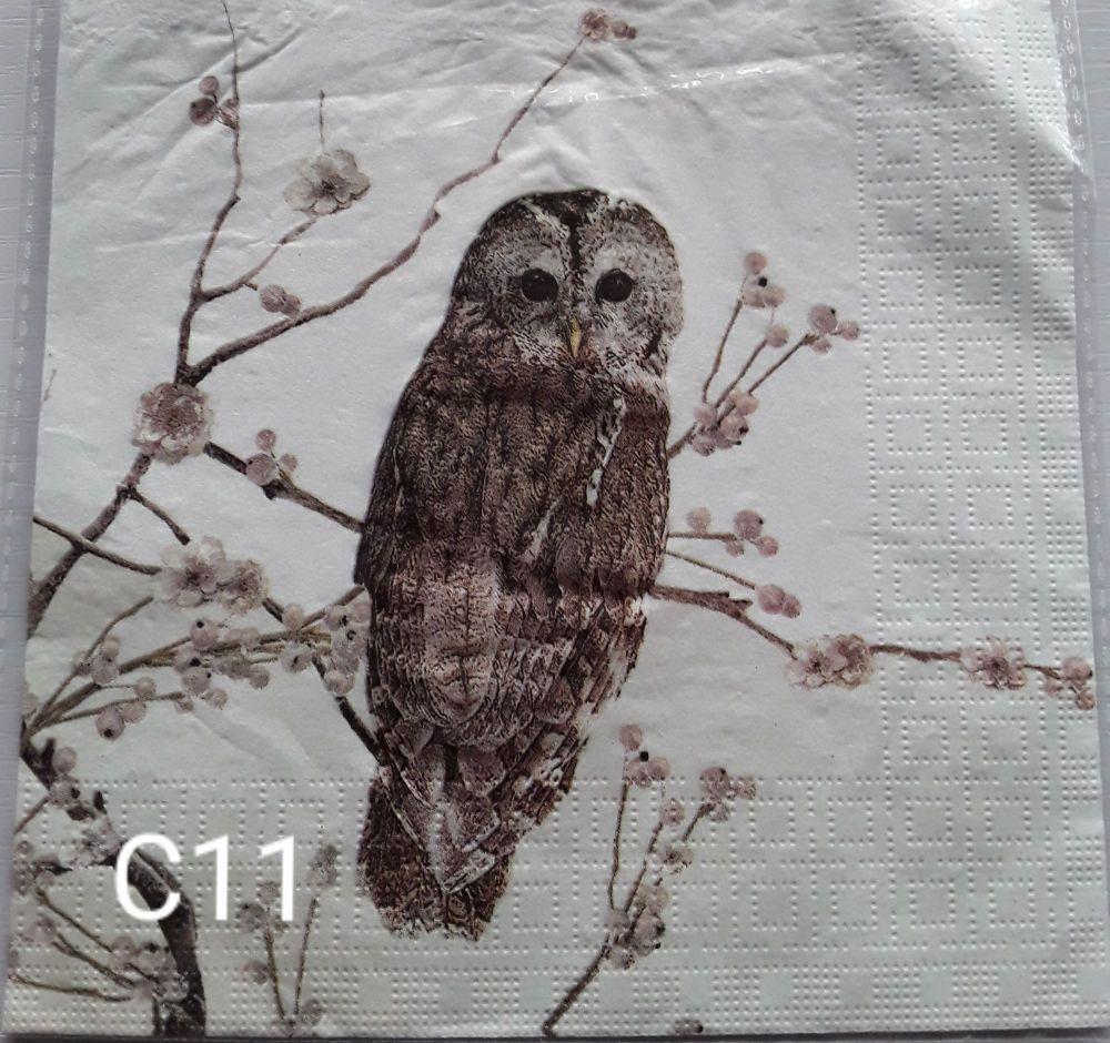 C11 - Owl