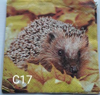C17 - Hedgehog