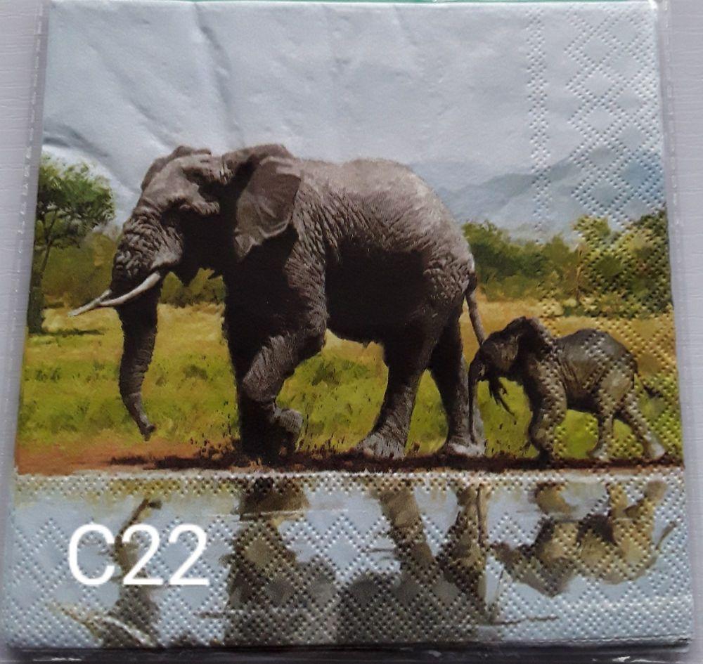 C22 - Elephants