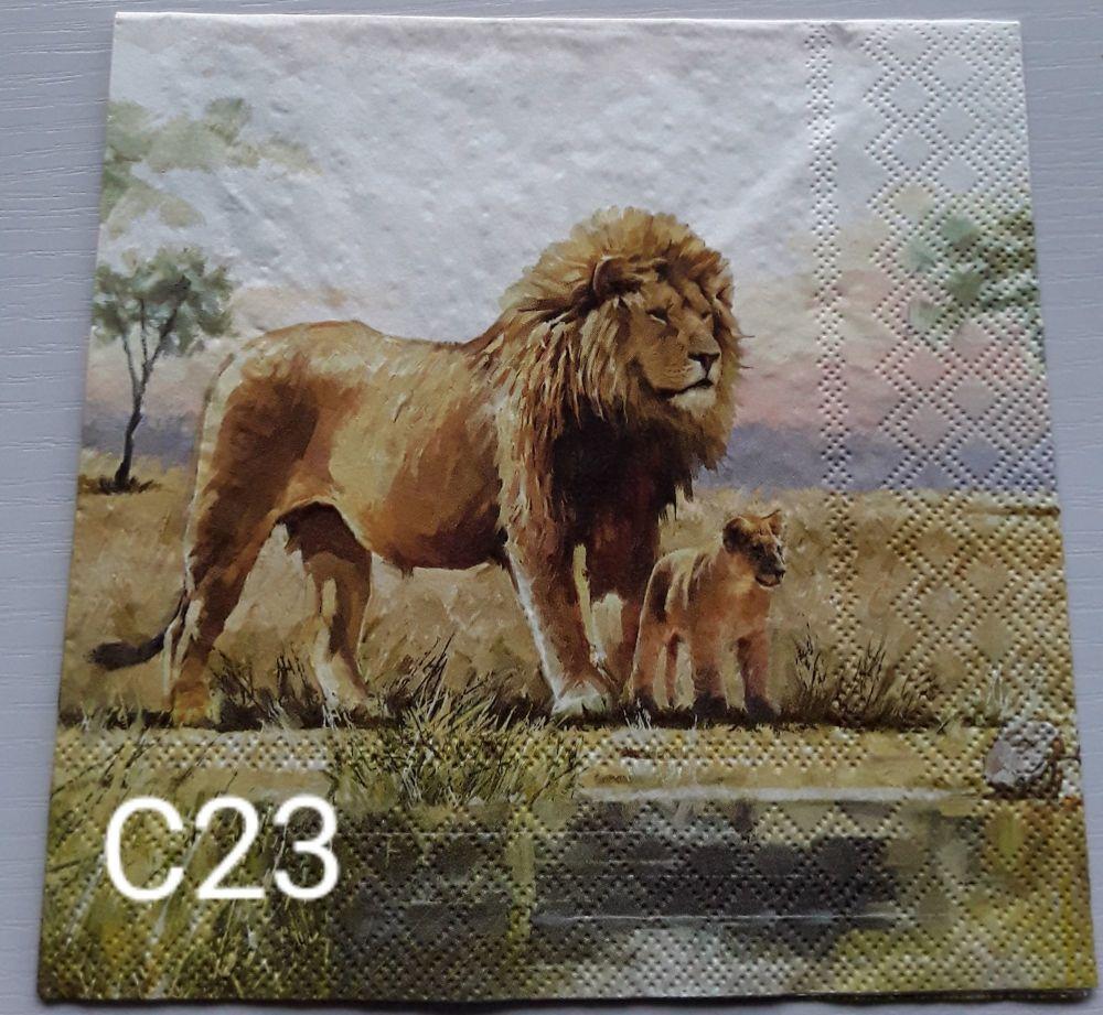 C23 - Lions