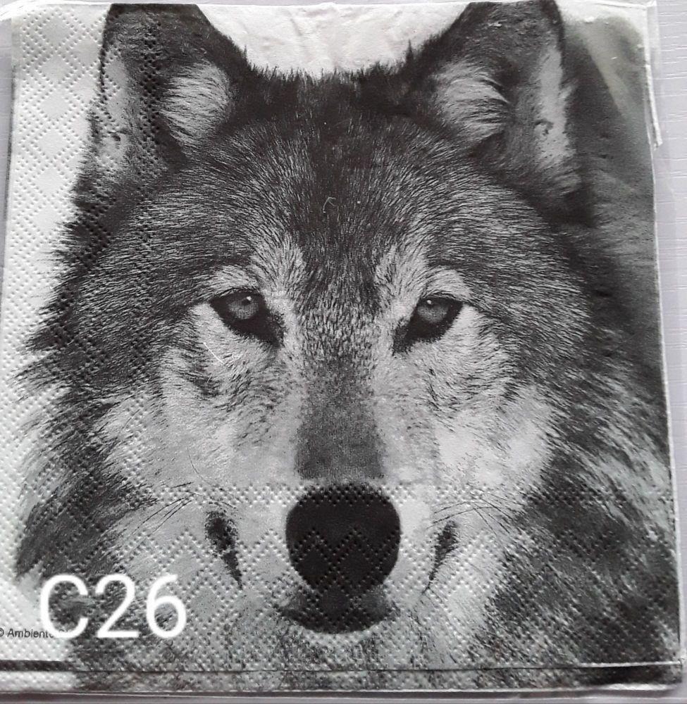 C26 - Wolf