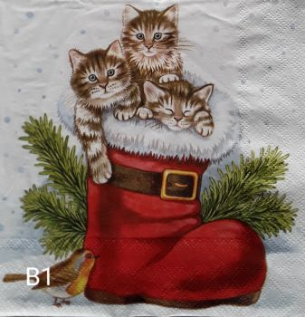 B01 - Kittens
