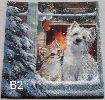 B02 - Cat & Dog