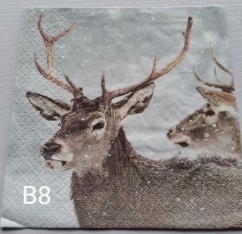 B08 - Stag