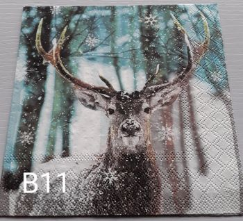 B11 - Stag