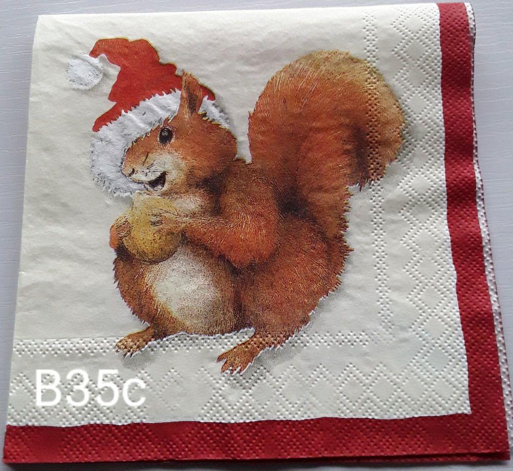 B35c- Cute Squirrel