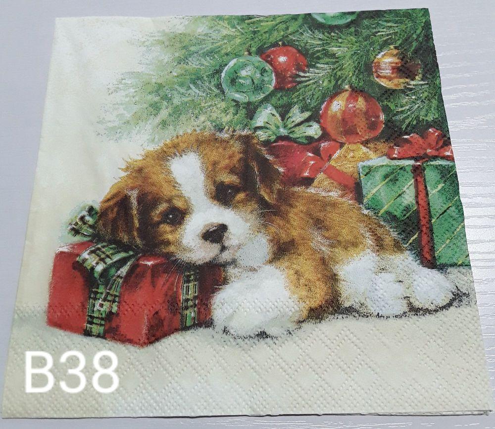 B38 - Cute Puppy