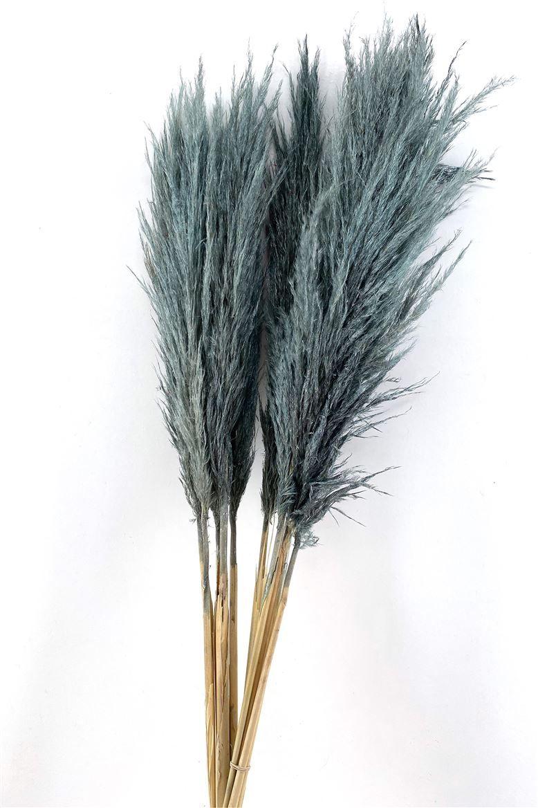 Grey Fluffy Pampas/Cortaderia 125cm